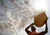 India's grains stocks at record high, exposed to rot