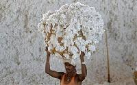 No additional cotton exports for current year: Trade Min