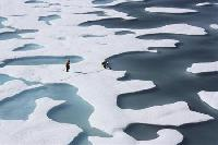 Save Arctic resources as ice melts: UN body
