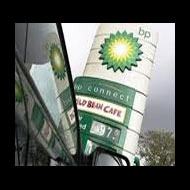 Groups sue BP for harm to endangered Gulf wildlife
