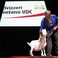 In Switzerland, politics can really get your goat