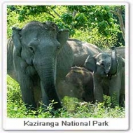 Kaziranga: Environment Ministry to probe animal deaths